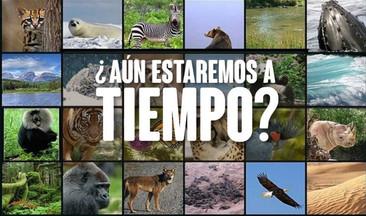 Estos son los 20 países con más especies en peligro de extinción en el mundo