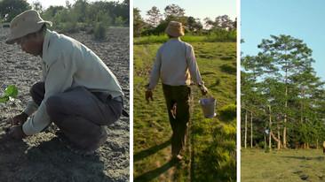 Desde 1970 este hombre ha plantado un bosque árbol por árbol