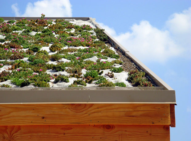 techos-verdes-2.jpg