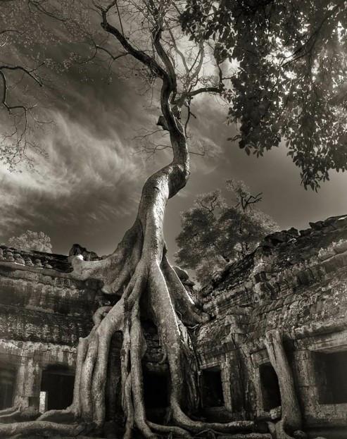 ancient-trees-beth-moon-17-960x623.jpg