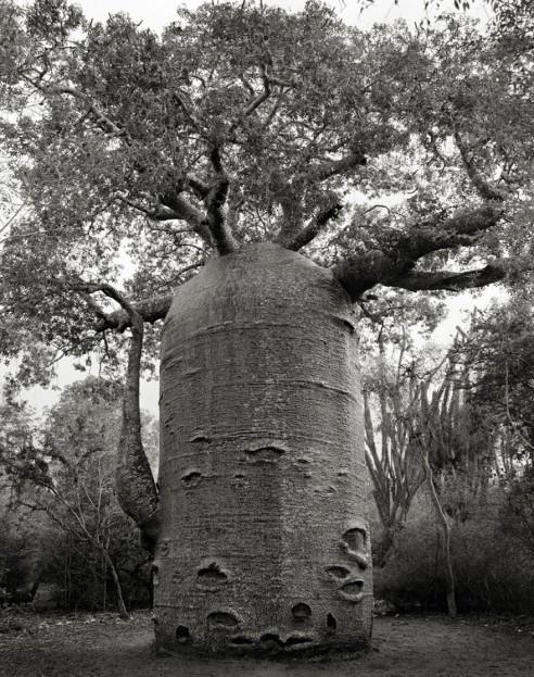 ancient-trees-beth-moon-11-960x623.jpg