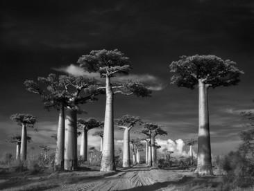 Mujer fotografió durante 14 años los árboles más longevos del mundo