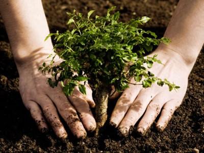 Consejos-de-jardinería-Cómo-plantar-un-árbol-400x300.jpg