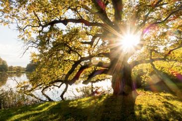 Árboles viejos son esenciales en el equilibrio ecológico
