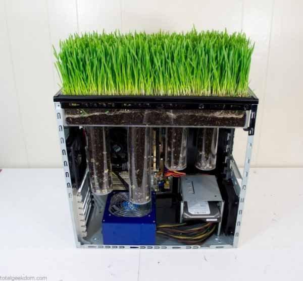 wheatgrass-pc.jpg