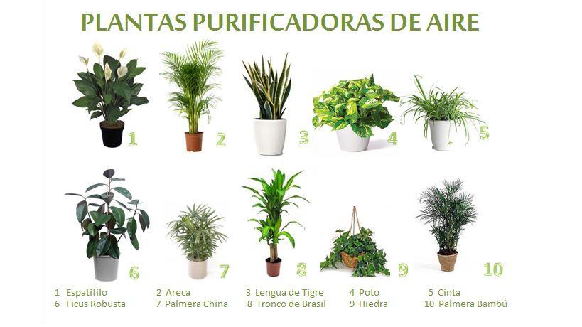 10-Plantas-Purificadoras-de-aire.jpg