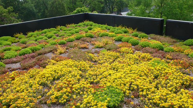 techos-verdes-6.jpg