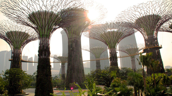 singapore-garden-by-the-bay-trees.jpg