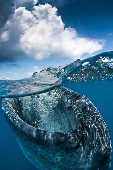 Estas fotografías revelan lo que realmente ocurre bajo la superficie del agua
