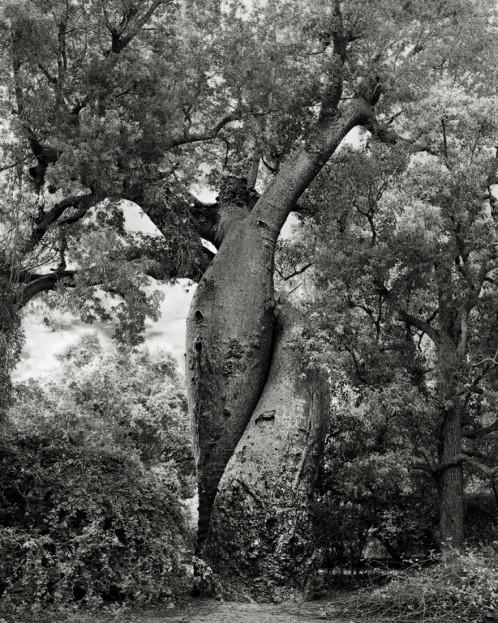 ancient-trees-beth-moon-20-960x623.jpg