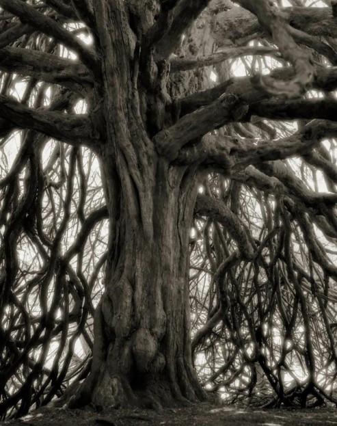 ancient-trees-beth-moon-18-960x623.jpg