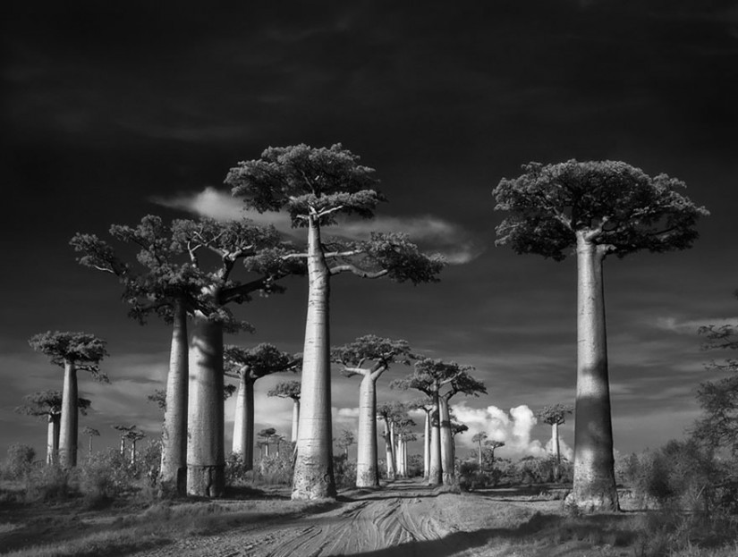 ancient-trees-beth-moon-1-960x623.jpg