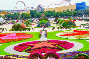 Miracle Garden: el jardín de flores más grande y colorido del mundo.