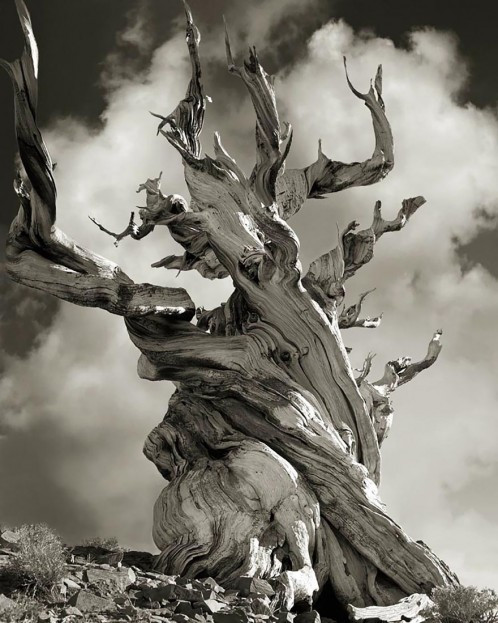 ancient-trees-beth-moon-15-960x623.jpg