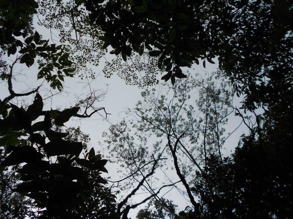 canopy gap.JPG