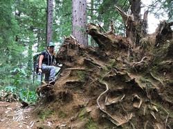 Fallen tree in Hawaii