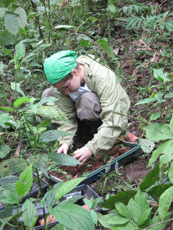 Andrea collecting seedlings