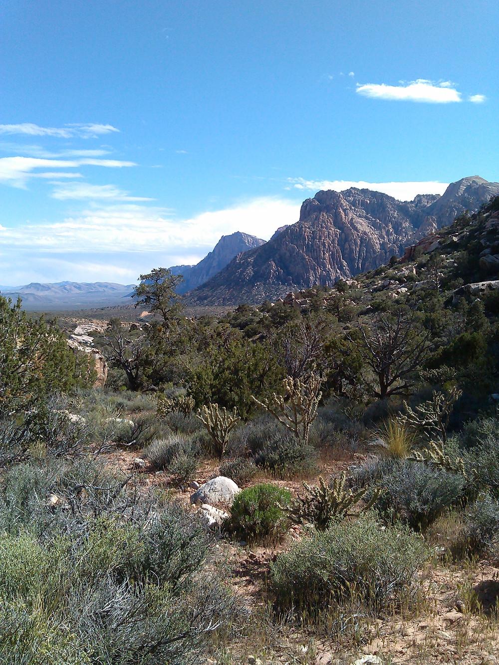 desert plants in front of red rock peaks