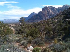 Where to camp near Las Vegas