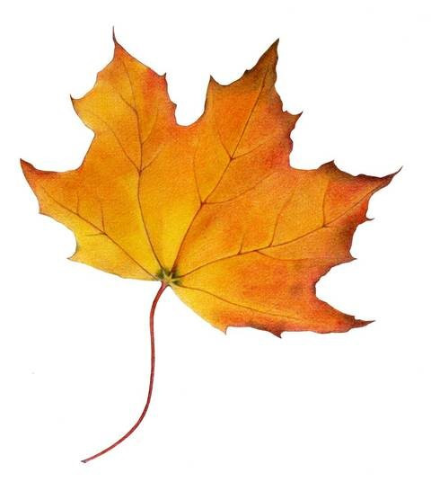 DetourOn logo maple leaf