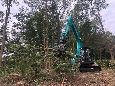 GroundLord have a wealth of experience in providing professional and efficient vegetation site clearance services - no matter the size or complexity of the site - as part of essential infrastructure development and improvements.