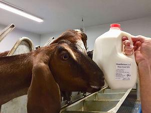 goatilicious_milk.jpg