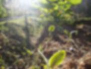 J B Organic.jpg