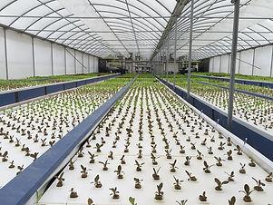mikeys_garden_greenhouse.jfif