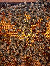 Gretchen Bee Ranch.jpg