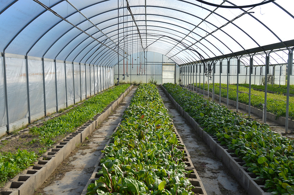 Inside, the greenhouses maintain the correct conditions so the organic farmer can grow sustainably year round