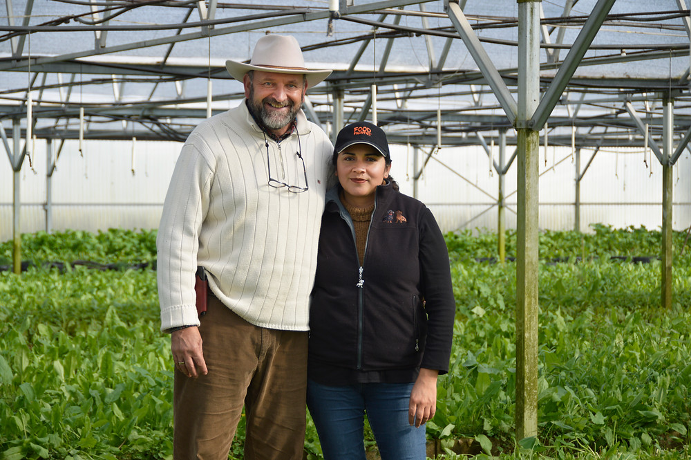 Pedro and Dayana Schambon in one of the renovated greenhouses filled with sorrel