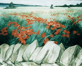 Poppies in the Cotswolds
