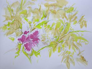 Orchids '17 #12