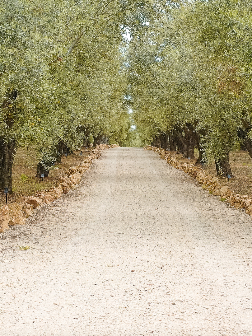 THE OLIVE RETREAT