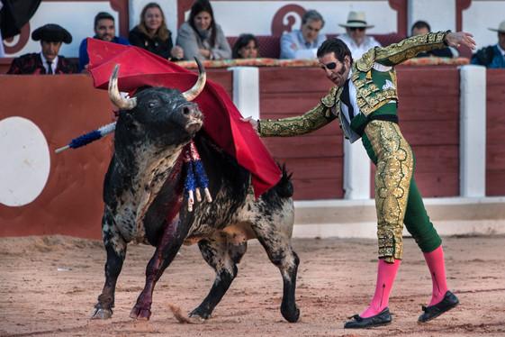 Padilla_Bullfighter_37.jpg