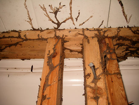 Termite Inspection Columbia MD