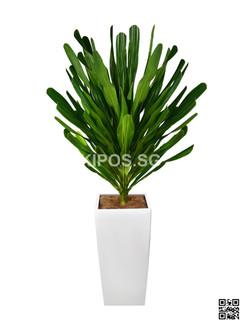 Tarzan Plant Rental