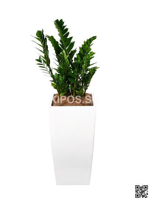 Zammai Plant Rental