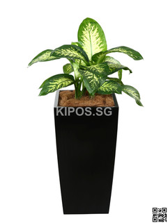 Pattaya Plant Rental