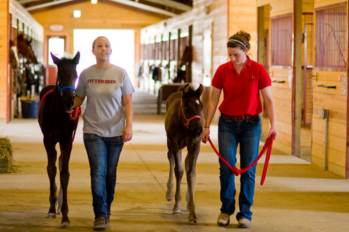 Otterbein Equestrian Facility - Westerville, OH