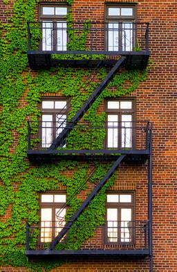 Fire Escape - Brooklyn, NY