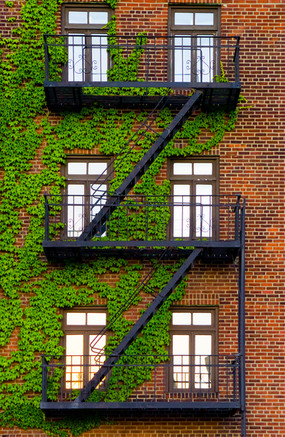 Fire Escape - Brooklyn, NY
