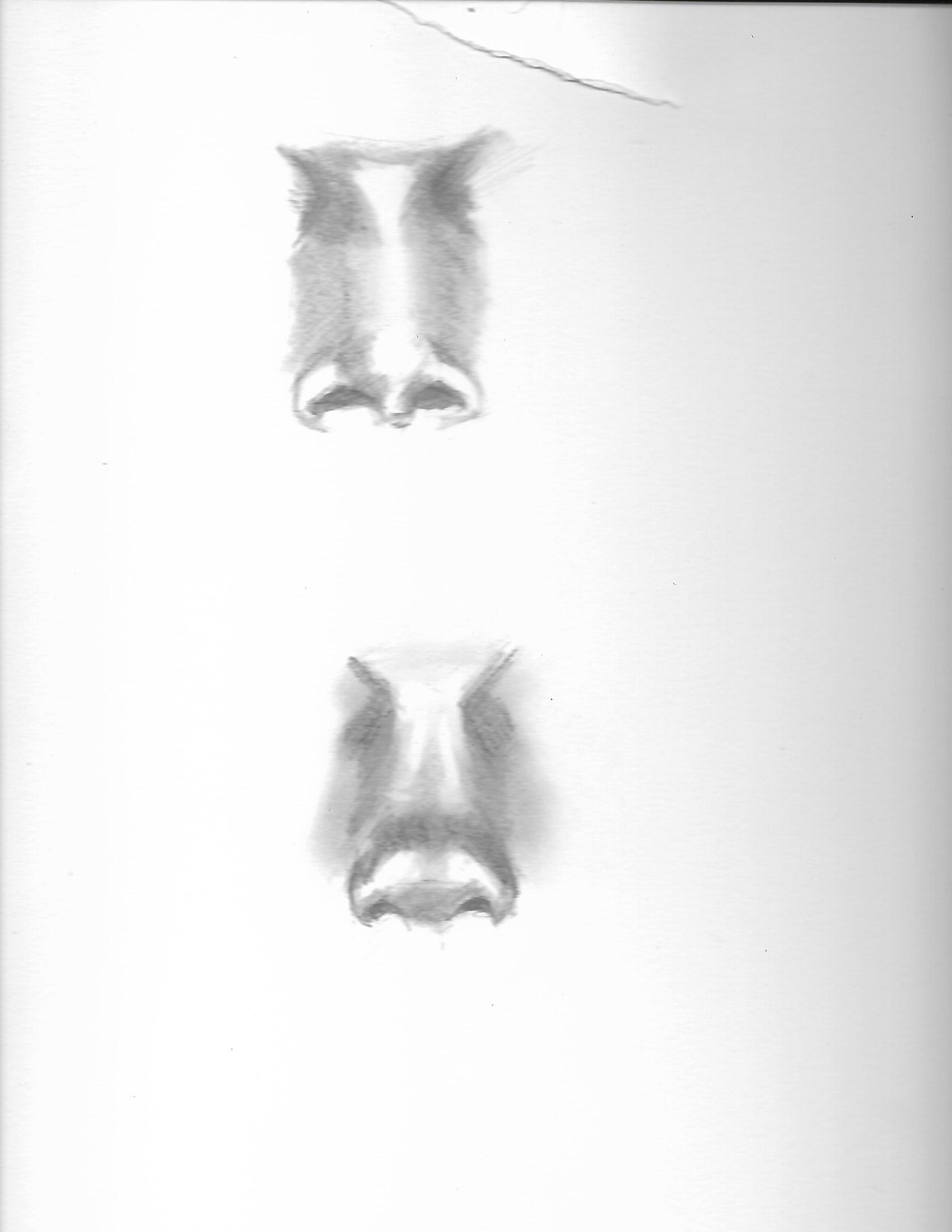 nose study 2