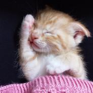 Bonus Cat photo