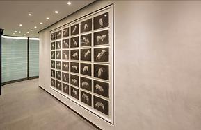 Hedge Fund Torus Office corridor with rodeo bull art