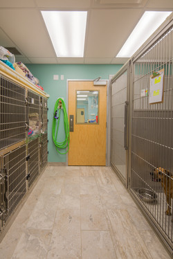 Noah's Westside Animal Hospital-40