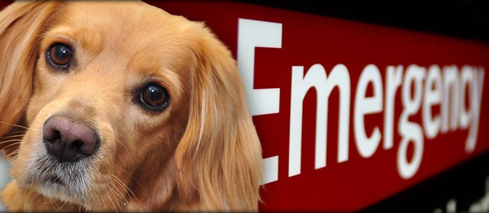 emergency-creature-comforts-animal-clini