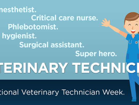 Veterinary Technicians and Their Role in Keeping Your Pet's Safe and Healthy!