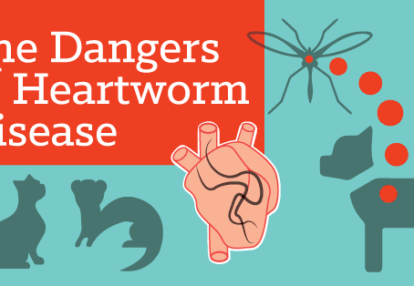 What's the Real Danger with Heartworms?