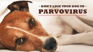 Canine Parvovirus - Central Indiana Update!